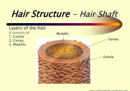 Hiểu rõ về cấu trúc sinh học của sợi tóc