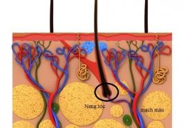 Trị rụng tóc: Nên bổ sung dưỡng chất từ trong hay ngoài?