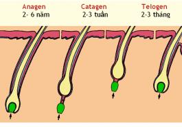 Tìm hiểu chu kì sinh trưởng của sợi tóc